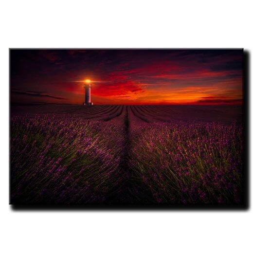 Obraz na stenu Levandulové pole pri západe slnka